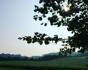 Scenery - Pernnille Oberg