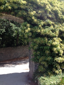 Blarney Castle Gardens..